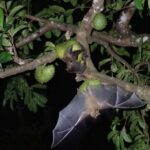 Chitrakoot: fear among villagers over bats with pandemic outbreak