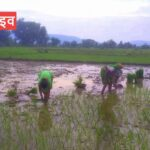After a long time there was rain in Panna district, a wave of happiness among the farmers