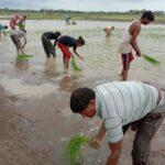 farmers enjoying during farming