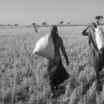 women farmer in lockdown