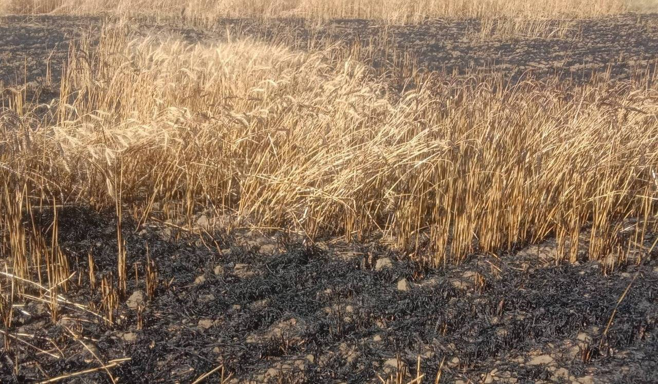 in tikamgarh Short circuit fire in the fields of about 12 farmers