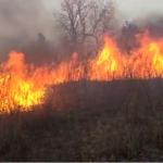 Fire in Bargarh valley IN CHITRAKOOT
